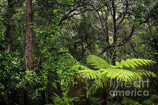 Tim Hester - Rainforest