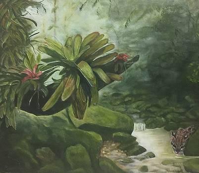 Rainforest by Virginia Butler