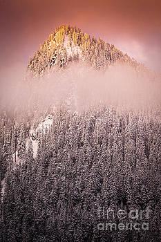 Inge Johnsson - Rainier Winter Scene