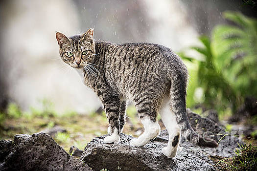 Rainy Cat 1 by Daniel Knighton