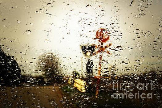 Rainy Day by Dimitar Hristov