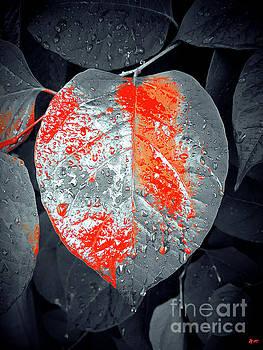 Rainy Day Garden by Daniel Janda