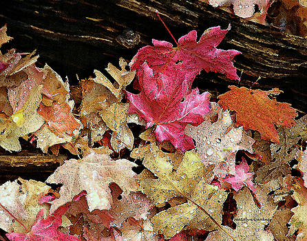 Rainy Day Leaves by Matalyn Gardner