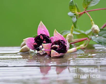 Rainy Day by Lila Fisher-Wenzel