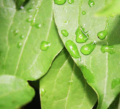 Rainy Day by MA Krisko