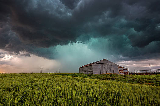 Rainy Day - Storm Passes Behind Barn in Wheat Field in Oklahoma by Sean Ramsey