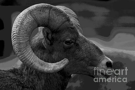 Ram by Barbara Schultheis