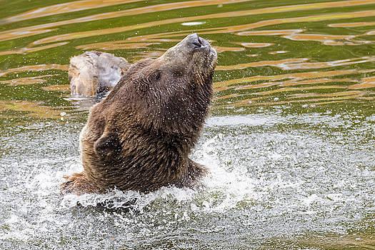 Rambo Bear by Harold Piskiel