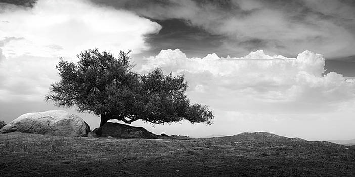 Ramona Grasslands Tree by William Dunigan