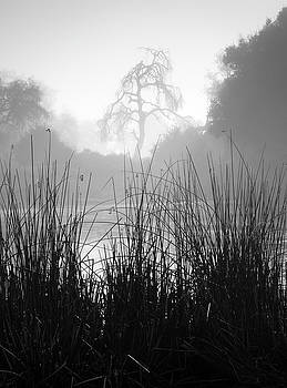Ramona Pond Grass and Tree by William Dunigan