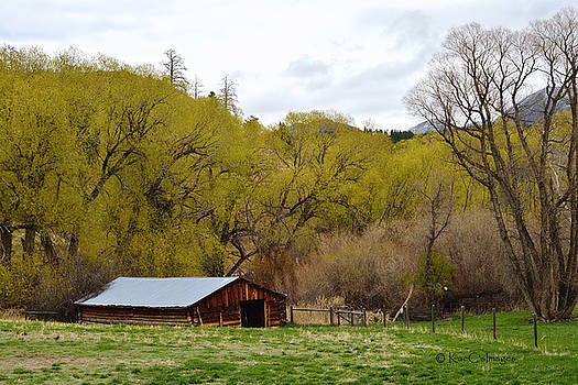 Ranch Shed under Springtime Trees by Kae Cheatham
