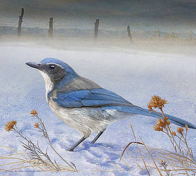 Ranchland Scrub Jay by R christopher Vest