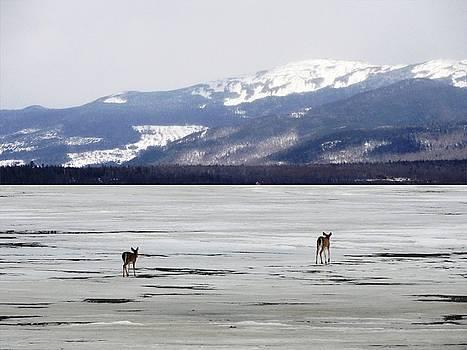 Mike Breau - Rangeley Lake Mountain View Deer Crossing