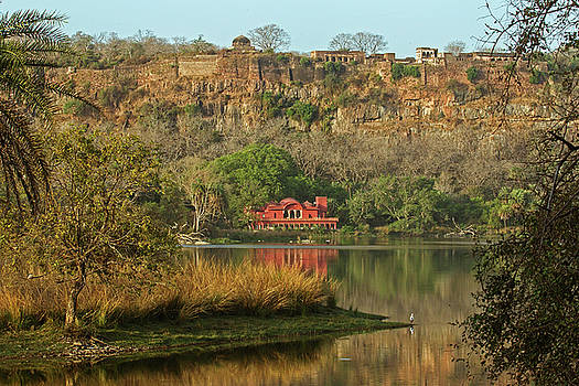Ranthambore  by Jean-Luc Baron