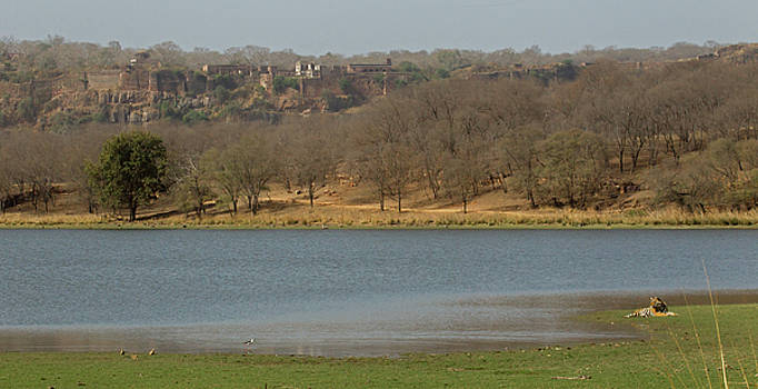 Ranthambore National Park by Jean-Luc Baron