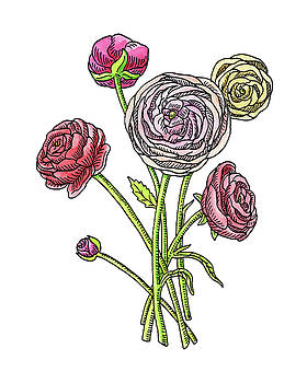 Ranunculus Flower Botanical Watercolor by Irina Sztukowski