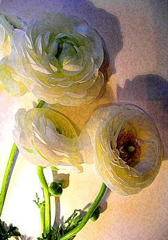 Ranunculus Martha by Lisa Fatone