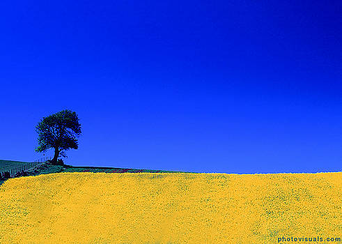 Rapeseed Field by David Hutchison