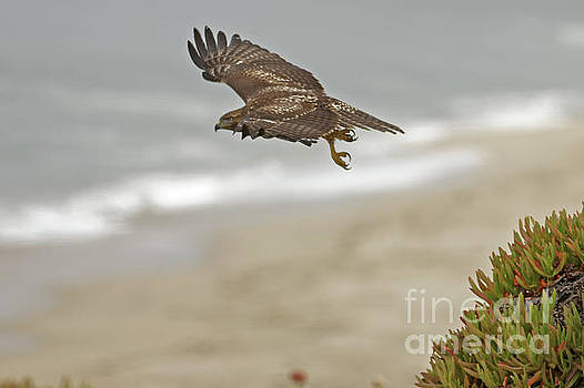Raptor Take Off by Natural Focal Point Photography