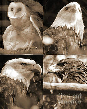 Raptors by Robert Ball