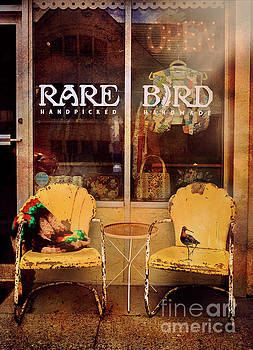 Rare Bird by Craig J Satterlee