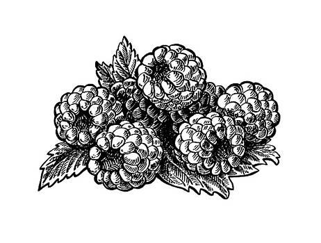 Irina Sztukowski - Raspberries Image