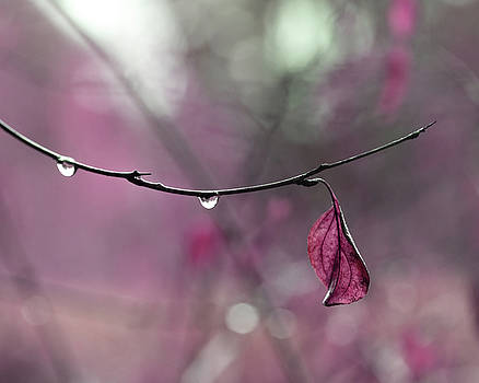 Raspberry Pink Leaf and Raindrops by Brooke T Ryan
