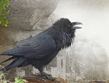 Raven At Mesa Verde Ruins by R christopher Vest