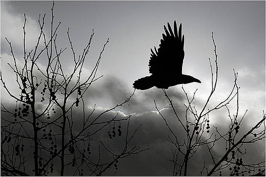 Raven    Fly with Me by Mirza Ajanovic