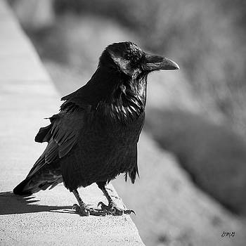 David Gordon - Raven IV BW