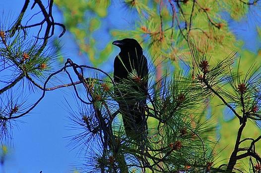 Raven Reverie by Helen Carson