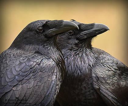 Raven Romance by Pamela Rose Hawken