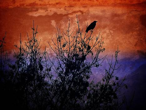 Dee Flouton - Raven Sentinel