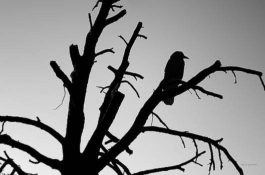 David Gordon - Raven Tree II BW