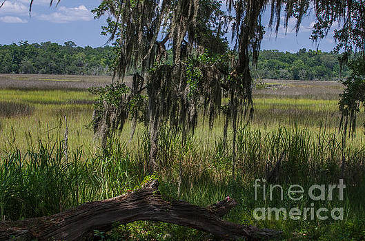 Dale Powell - Ravenel Marsh View