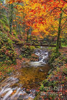 Ravennaschlucht - Cascades and Waterfalls II by Bernd Laeschke