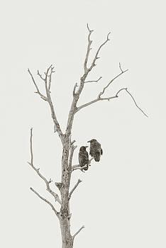 Ravens in Winter by Scott Wheeler