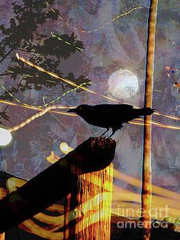 Ravens Night by Robert Ball