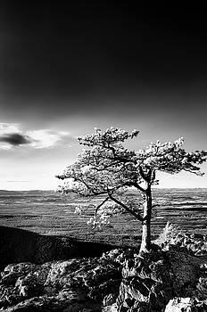 Ravens Roost IR Tree by Kevin Blackburn