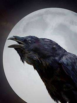 Ravensong by Nigel Follett