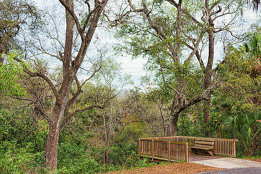 John M Bailey - Ravine Gardens Lookout