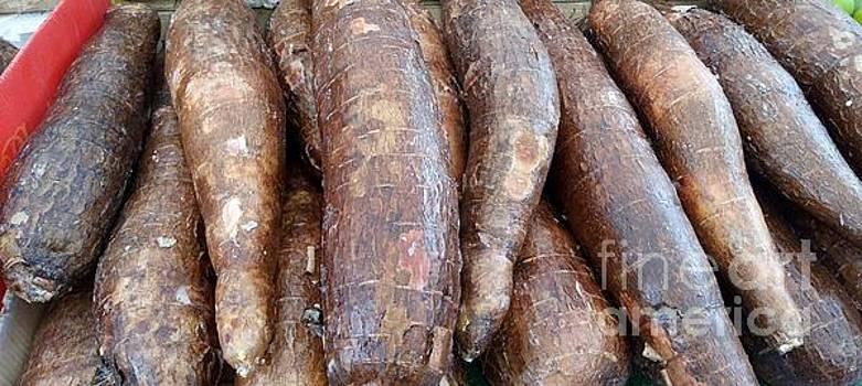 Raw Root Cassava by Mudiama Kammoh
