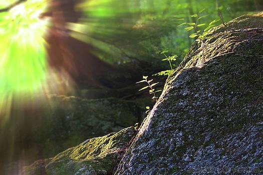 Rays by Jerry LoFaro