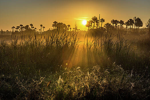 Rays of Light by David Hart