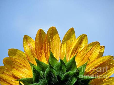 Rays of Sunshine by Chad and Stacey Hall