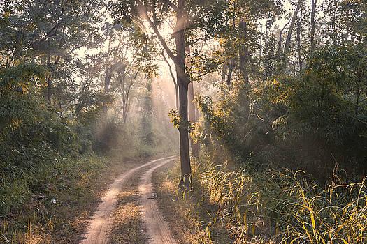 Rays through jungle by Hitendra SINKAR
