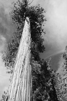 Reach for the Sky black and white by Julie Lourenco