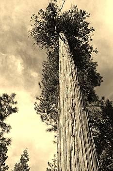 Reach for the Sky sepia by Julie Lourenco