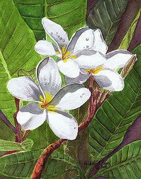 REACH FOR THE SUN White Frangipani by Michele Ross