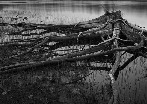 Reaching for shore by Nancy Killam